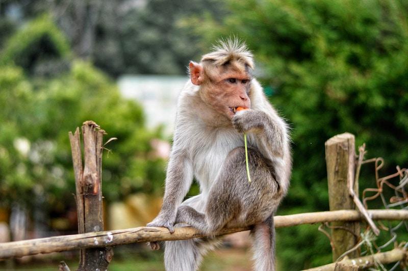 chaos monkey