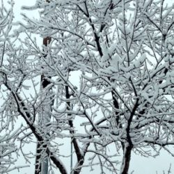 Snow on a bare tree in winter